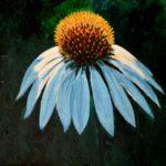 White Echinacea 2017 (private collection)