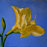 yellow_lilly