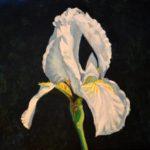 White Iris 2017 (private collection)