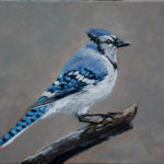 The Bluejay 2019 (private collection)