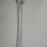 Bone study - 1980